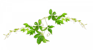 bitkisel-gebelik